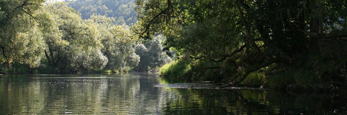 Flussauen der Donau